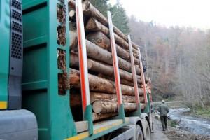 lemne-camion