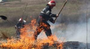 incendii_vegetatie